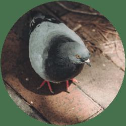 vyklizeni-po-holubech